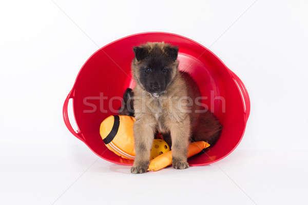 子犬 立って プラスチック バケット 孤立した ストックフォト © AvHeertum