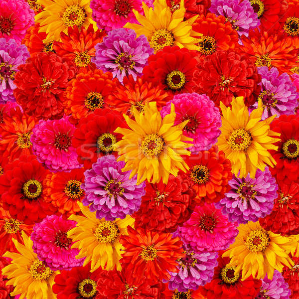 flowers background Stock photo © Avlntn