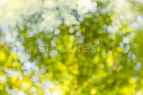 夏 ぼけ味 美しい 明るい テクスチャ 春 ストックフォト © Avlntn