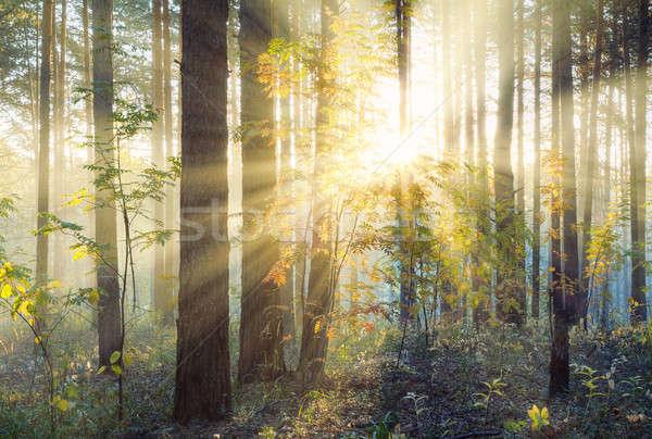 Gün batımı orman sonbahar çim ışık yaprak Stok fotoğraf © Avlntn