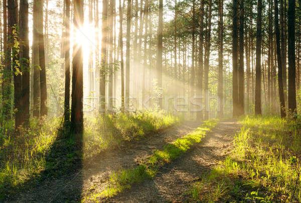 Pôr do sol mata belo grama estrada floresta Foto stock © Avlntn