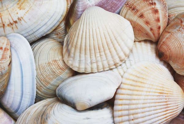 Schelpen natuur groep shell achtergronden Stockfoto © Avlntn
