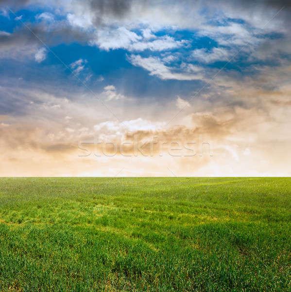 空 フィールド 美しい 日没 風景 夏 ストックフォト © Avlntn