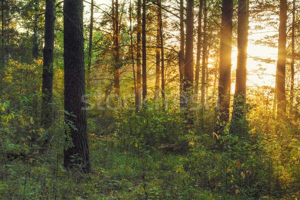 Wygaśnięcia lesie piękna drogowego lasu drzew Zdjęcia stock © Avlntn