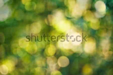 Autunno bokeh foresta abstract luce sfondo Foto d'archivio © Avlntn
