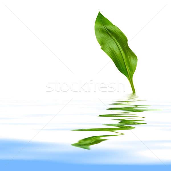 葉 反射 緑色の葉 白 背景 緑 ストックフォト © Avlntn