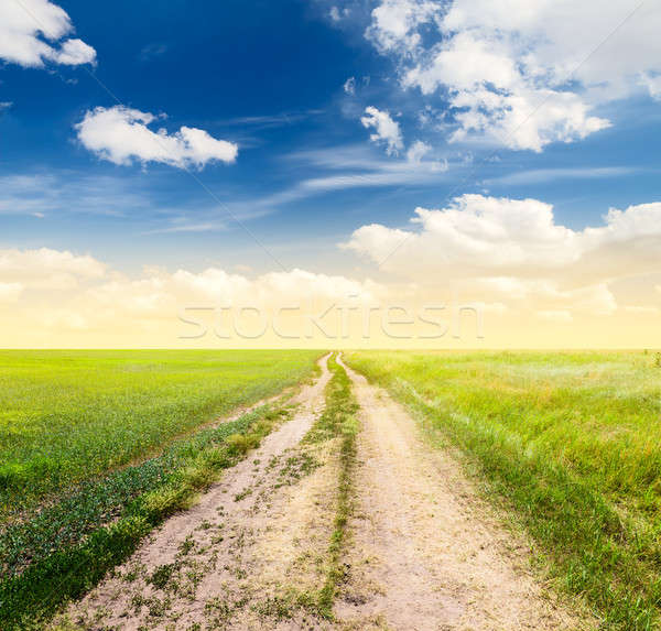 in the fields, rural landscape with country road Stock photo © Avlntn