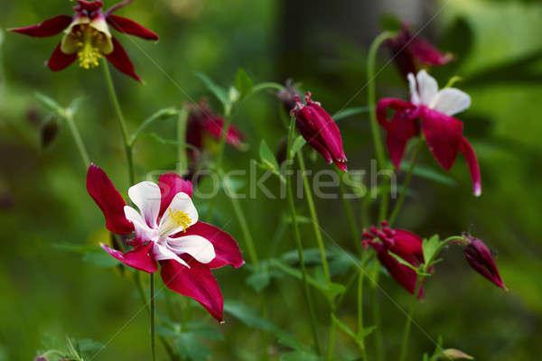 цветок весны трава природы свет здоровья Сток-фото © Avlntn