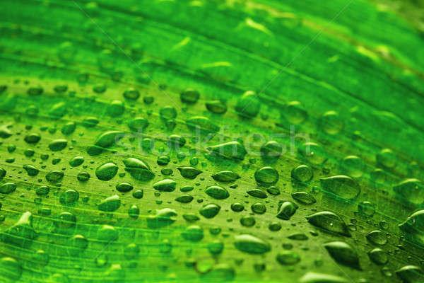 葉 値下がり 緑色の葉 水 光 背景 ストックフォト © Avlntn