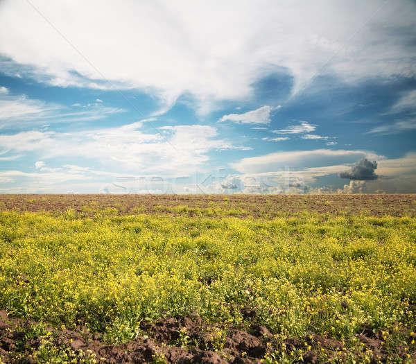 空 フィールド 風景 夏 緑 青 ストックフォト © Avlntn