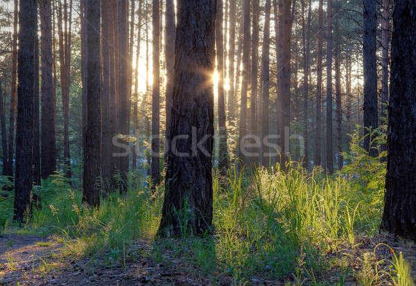 Majestueux coucher du soleil bois herbe forêt lumière Photo stock © Avlntn