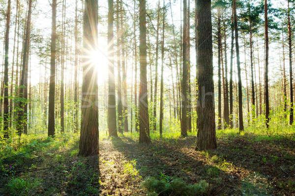 ストックフォト: 美しい · 日没 · 森 · 草 · 道路 · 太陽