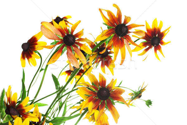黄色 家族 自然 庭園 夏 グループ ストックフォト © Avlntn