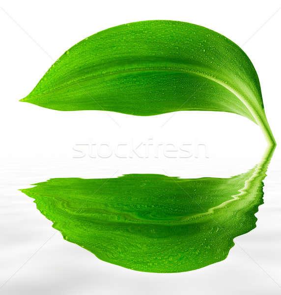 値下がり 緑色の葉 反射 水 葉 緑 ストックフォト © Avlntn
