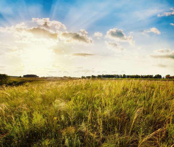 Velden zonsondergang gras zon landschap schoonheid Stockfoto © Avlntn