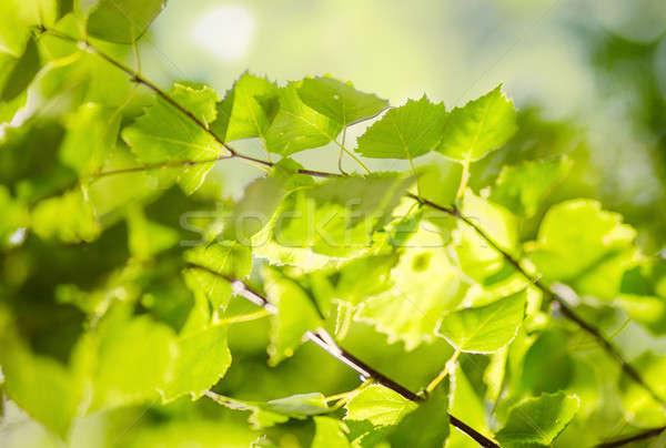 葉 緑 ぼやけた ぼけ味 森林 太陽 ストックフォト © Avlntn