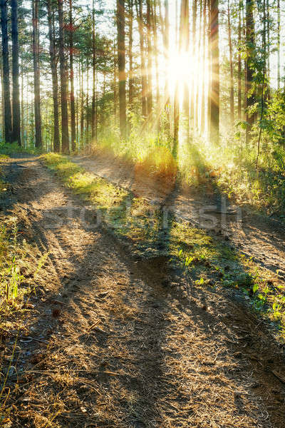 日没 森 草 道路 自然 木 ストックフォト © Avlntn