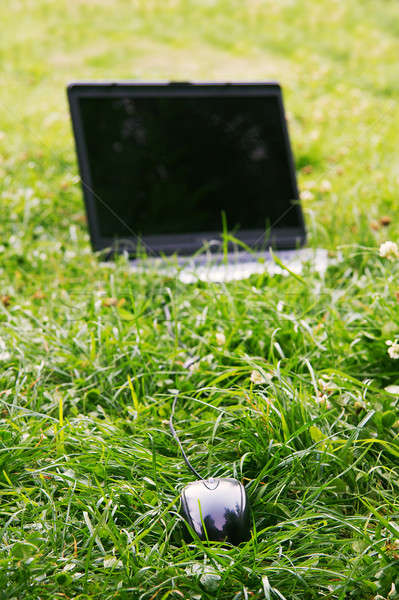 Muis gras groen gras natuur technologie zomer Stockfoto © Avlntn