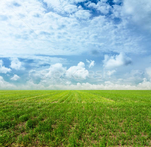небе полях красивой зеленый пейзаж лет Сток-фото © Avlntn
