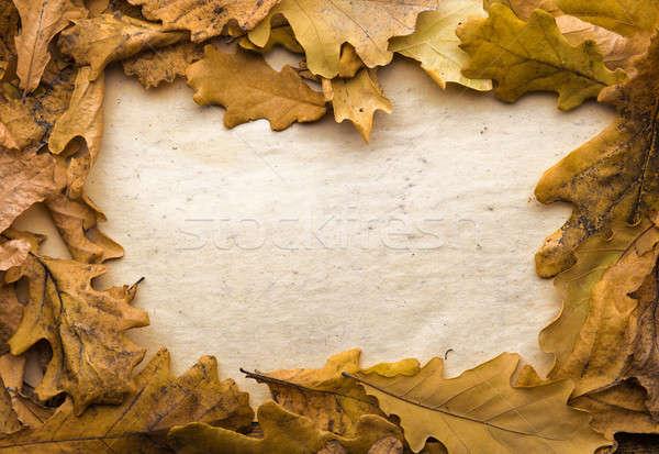 Yaprakları kâğıt sonbahar yaprakları Eski kağıt arka plan çerçeve Stok fotoğraf © Avlntn