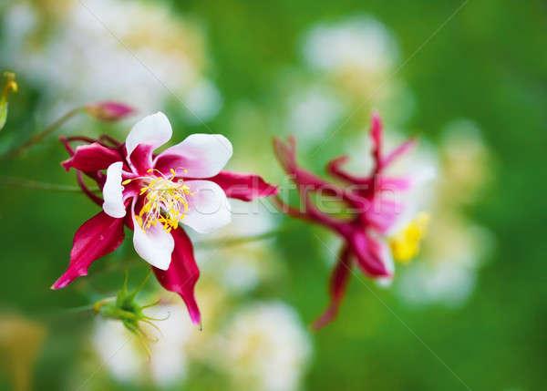 çiçek aile bahar çim doğa ışık Stok fotoğraf © Avlntn