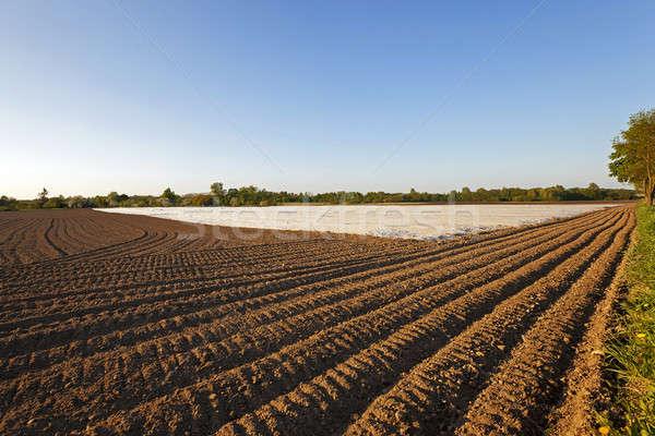 области сельскохозяйственный материальных теплица Ложь бизнеса Сток-фото © avq