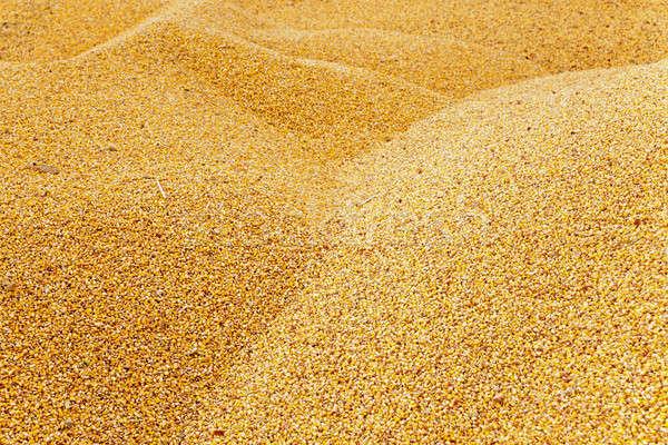 corn  heap  Stock photo © avq
