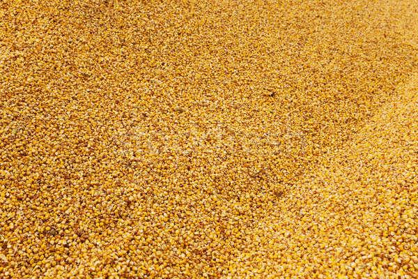 Kukurydza czyszczenia wole tle Zdjęcia stock © avq