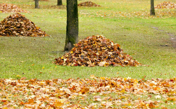the fallen-down foliage   Stock photo © avq