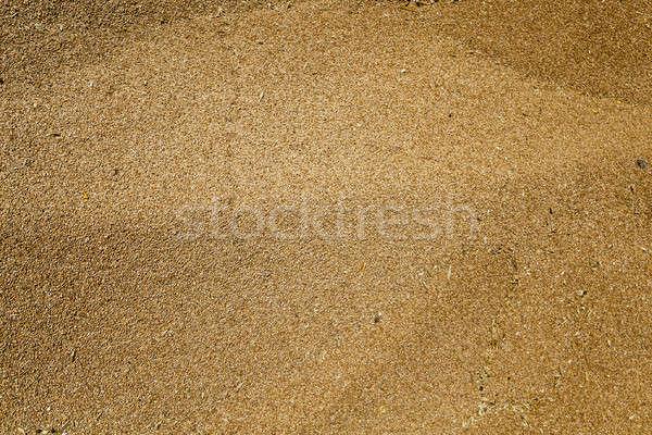 wheat crop , harvest Stock photo © avq