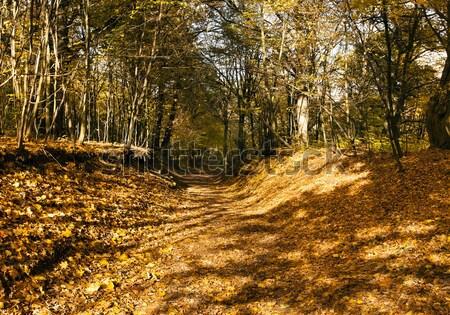 Drzew spadek jesienią czasu parku charakter Zdjęcia stock © avq