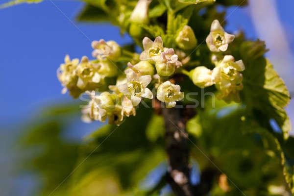 開花 花 小 自然 葉 ストックフォト © avq