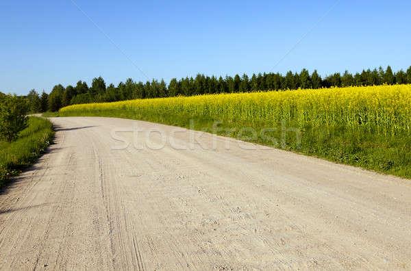 rural road   Stock photo © avq