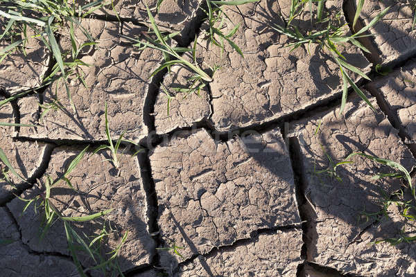 треснувший земле землю засуха Сток-фото © avq