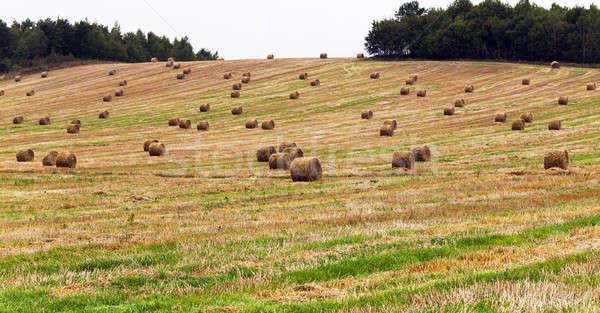Saman hasat şirket tahıl doğa Stok fotoğraf © avq