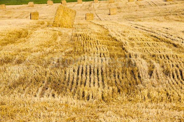 Hasat tahıl tarım alan temizlik Stok fotoğraf © avq