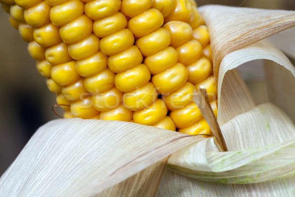 トウモロコシ 秋 農業の フィールド 成熟した ストックフォト © avq