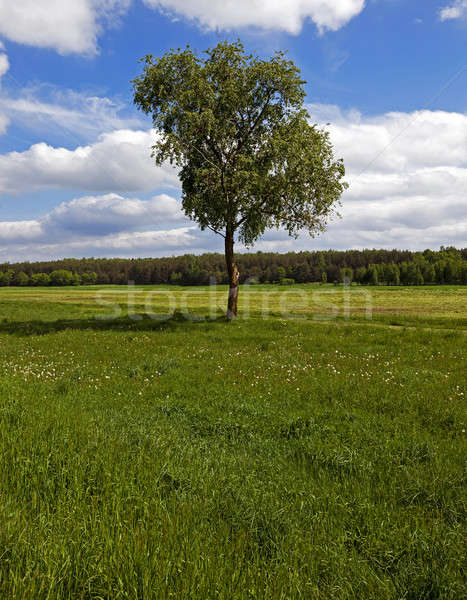 tree in the field   Stock photo © avq