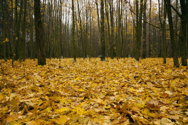 осень древесины деревья растущий земле Сток-фото © avq