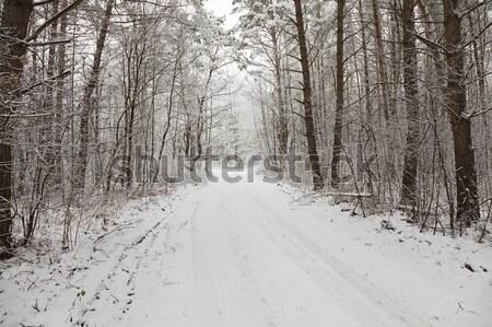Winter weg gedekt sneeuw winterseizoen boom Stockfoto © avq