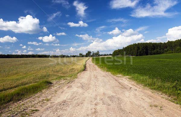 Bahar yol yaz sezon ağaç Stok fotoğraf © avq