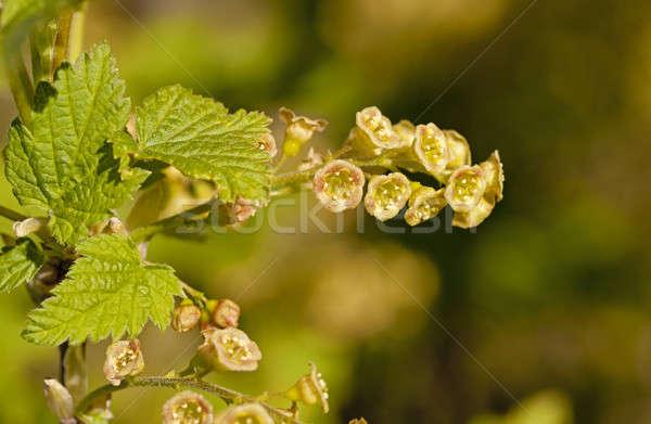 Kwiaty mały charakter liści Zdjęcia stock © avq