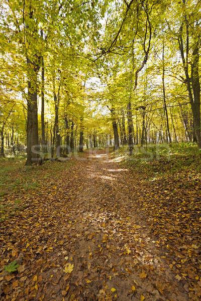 ősz fa fák növekvő terület őszi idény Stock fotó © avq