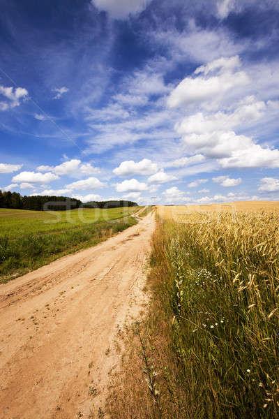 ストックフォト: 農村 · 道路 · しない · 車 · 緑 · トウモロコシ