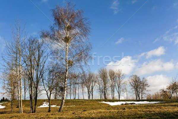 Ağaçlar bahar sezon başlangıç gökyüzü ağaç Stok fotoğraf © avq