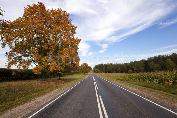 the autumn road   Stock photo © avq