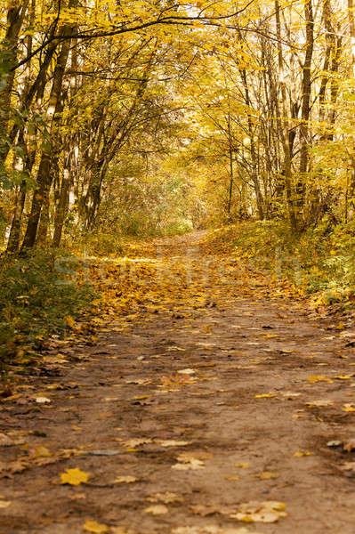 秋 木材 木 成長 ストックフォト © avq