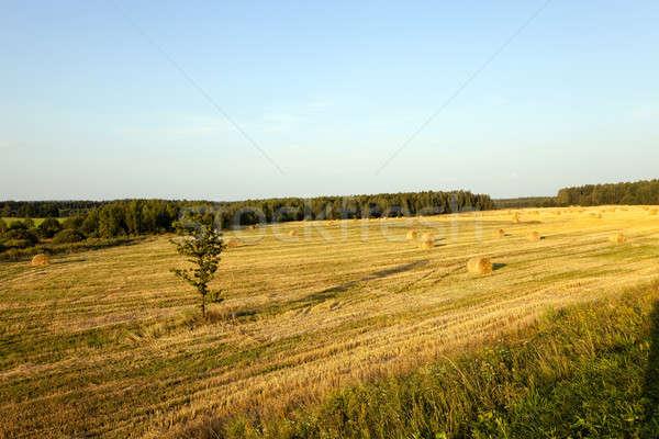 соломы урожай компания злаки дерево Сток-фото © avq