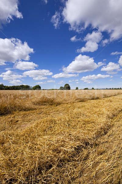 Rolniczy dziedzinie prowadzi na zewnątrz żywności Zdjęcia stock © avq