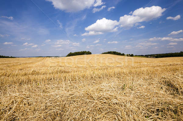 Buğday tarım alan hasat şirket gökyüzü Stok fotoğraf © avq